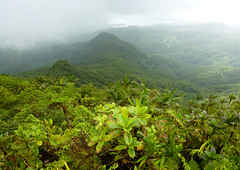View from Nan Aloud (Ngihneni), the highest point on Pohnpei, Micronesia (ebuechley) Tags: forest island rainforest scenery cloudforest tropics micronesia pohnpei ponape
