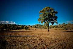 rbol (Cmara de Ciudad) Tags: mxico jalisco sierra sur montaa mazamitla epenche