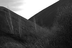 géants1 (xtrice) Tags: 6 france gimp mines fosse pasdecalais charbon terrils haillicourt
