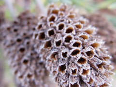 Macro Plant (shaire productions) Tags: old winter plants plant detail macro fall nature floral closeup season photo image seasonal photograph dried seedling pores imagery porous cycleoflife poreous