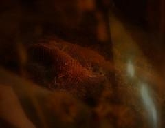 Wenn Bach Bienen gezchtet htte ~ If Bach would have kept Bees -- Beehive, Naturhistorisches Museum Wien (hedbavny) Tags: vienna wien shadow music orange museum austria licht sterreich natur naturalhistory innen bach gelb inside musik naturalhistorymuseum schatten beehive baum glas museumofnaturalhistory nhm vitrine netz gitter naturhistorischesmuseum draht honig kunstlicht wachs johannsebastianbach exponat bienenstock arvoprt maschendraht naturhistorischesmuseumwien lichtreflex geflecht masche prt unbewohnt bienenzucht zchten ausgehhlt bienenwaben ausstellungsstck drahtgitter lichtreflektion paert hineinschauen honiggelb museumofnaturalhistoryvienna naturhistorischesmuseumderstadtwien arvopaert kamerabienenstock wennbachbienengezchtethtte