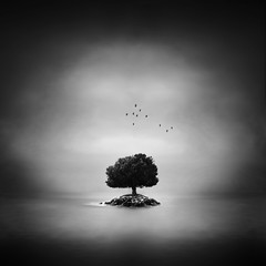 tree island (windrides) Tags: sea white black tree birds island manipulation d3x