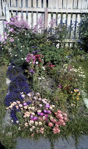Blomster på Nidaros Domkirkes kirkegård (1984)