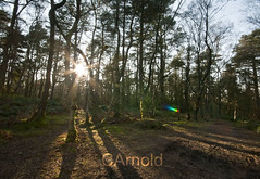 sun sparkle (justyourcofchi) Tags: wood uk blue trees england sky sun tower history nature sunshine woodland point landscape countryside spring high model woods flickr photographer view hill national trust leith forests canonsun chiarnold justyourcupofchicom justyourcupofchi