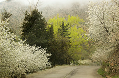 Spring in the mountains (..Ania.) Tags: road mist mountains fog spring morocco highatlas bloomingtrees ourikavalley