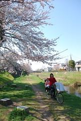 野川さくら 画像15