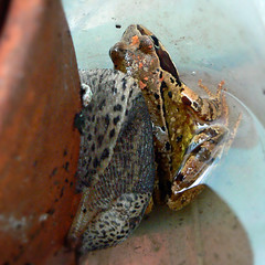 Frog_LeopardSlug.jpg (Tina Marie W) Tags: frog gardenwildlife slugssnails elementsorganizer