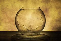 Broken Bowl (AdarshaR) Tags: old stilllife abstract broken glass leaf fineart bowl dirty fishbowl mysterious