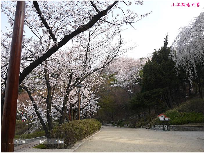 首爾鞍山公園櫻花道안산공원벚꽃길 (12).jpg