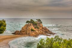 La Isla bonita (jaumedarenys) Tags: mar pins catalonia catalunya costabrava roques ocells platges santantonidecalonge onades calacaproig