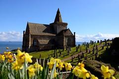 St Monans Auld Kirk, Fife (iancowe) Tags: flowers sea church graveyard st parish scotland spring fife north scottish daffodil churchyard easy daffodils anstruther firthofforth stmonans monans neuk stmonance