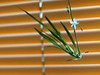 tiny... (matsugoro) Tags: white flower digital pen 50mm room olympus myroom zuiko epl2