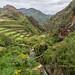 Terraced Farming, Andes Mountains, Peru