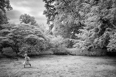 Romp (F. Neil S.) Tags: trees girl grass garden bench campus child sony run filter infrared unc cokerarboretum 850nm neewer nex6 fullspectrumconversion