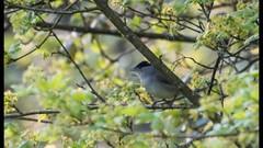 Spring Birds slideshow 2016 (WendyCoops224) Tags: birds canon eos slideshow 70d 100400mml wendycooper springwatchspring