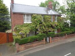 Wisteria (Pete 1957) Tags: fens cambridgeshire wisteria fenstanton cambs
