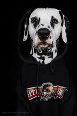 Sith Lord (Bea Burin-Herbst | Fotografie) Tags: portrait dog pet pets black dogs canon studio star starwars indoor hund doggy wars haustier darkside dalmatian hunde snape darklord rde dalmatiner petphotography sithlord petphotographer haustierfotograf haustierfotografie