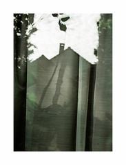 Prcipit (hlne chantemerle) Tags: sky tree window cloudy curtain ciel arbres toit extrieur reflets paysages feuilles ombres fentres tissu rideaux nuageux vgtaux photosderue
