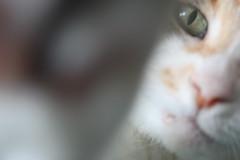 Glinda (Tricia Lynne) Tags: portrait animal cat nose greeneyes paws upclose cateyes blocking