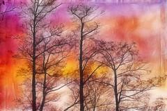 Winter Trees (Bozze) Tags: tree texture colors wwwoppnahorisonterse wwwopenhorizonsfinearteu