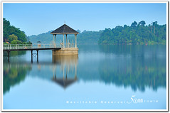 Singapore macritchie reservoir (fiftymm99) Tags: park morning reflection nature water forest garden yahoo google nikon singapore drinking reservoir reserved macritchiereservoir d300 fiftymm nikond300 fiftymm99 gettyimagessingaporeq2