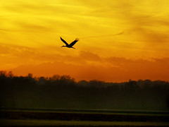 CIMG9935 sunset flying stork (pinktigger) Tags: sunset italy fly italia flight stork friuli fagagna landsscape friul cicogna feagne