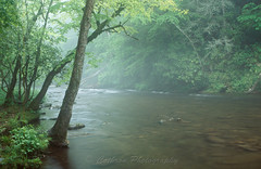 Morning Mist (John Cothron) Tags: tree film nature water rain rock fog creek forest 35mm river landscape morninglight nc spring stream outdoor northcarolina filter flowing eos3 cpl freshwater deepcreek brysoncity fujivelvia50 carolinas greatsmokymountainnationalpark rvp50 swaincounty deepcreektrail canonef24mmf14l deepcreekcampground johncothron cothronphotography 2jtrip2008