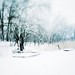 """Pure Winter • <a style=""""font-size:0.8em;"""" href=""""http://www.flickr.com/photos/76203733@N02/6846518767/"""" target=""""_blank"""">View on Flickr</a>"""
