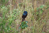 IMG_6857L4 (Sharad Medhavi) Tags: bird canonef100400mmf4556lisusm canoneod50d birdsandbeesoflakeshorehomes