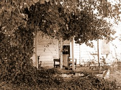 Abandoned--A Porch (David Hoffman '41) Tags: door wood trees house abandoned home overgrown leaves sepia architecture concrete virginia vines chair open empty neglected chasecity porch vacant frame vernacular posts deserted boydton mecklenburgcounty