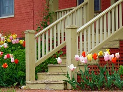 Tulips and Weathered Steps (angel_nicklas) Tags: flowers green stairs grey nikon calendar tulips postcard cottage flowerbed porch calendarshot nikond3000