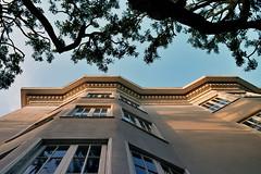 (Brandon Doran) Tags: sanfrancisco california ca building tree film up architecture kodak 100 sfist pacificheights ektar f3hp kodakektar100