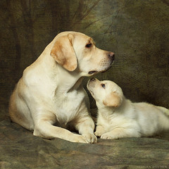 mom (Sergey Ryumin) Tags: friends portrait dog nature canon labrador retriever textures textured memoriesbook magicunicornverybest highqualitydogs