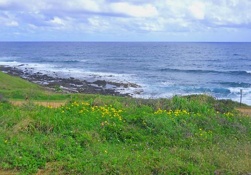 Kauai scene 1