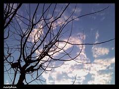 تنهایی (no0shin) Tags: sky cold alone calm lone آسمان آرامش تنهایی دلتنگی