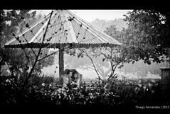 @AMOR NA CHUVA (sidddrock) Tags: parque love canon saopaulo amor chuva 300mm cachorro casal tarde 2012 villalobos 60d thiagofernandes