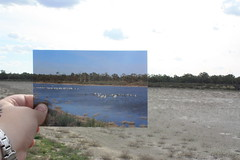 Now and Then Pelicans (Callie Nickolai) Tags: pelican egret berri highriver riverland floodplain gurra 2011flood abcopenriverland abcopen:project=nat2 callienickolai