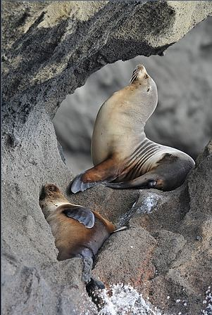 Crociere alle Galapagos