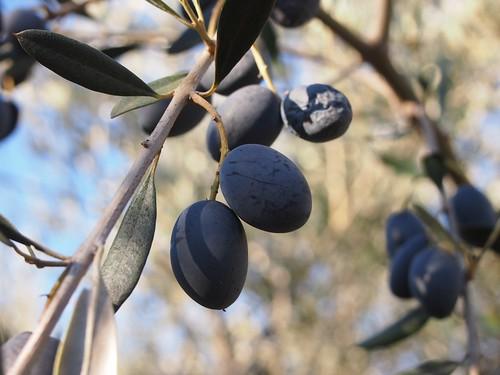 Pre-Olive Oil