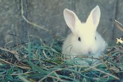 Little bunny <3 (tráfico en el cielo ♥) Tags: pet white cute bunny samsungnx10 highqualityanimals