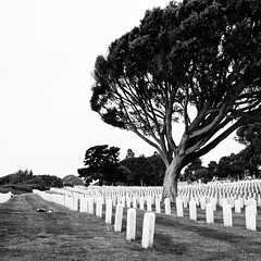 (-issata) Tags: blackandwhite tree cemetery grass sandiego squareformat tombstones windblown pointloma fortrosecrans nikond7000 nikkor35mmf18gafs