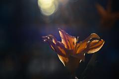 里花の壁紙プレビュー