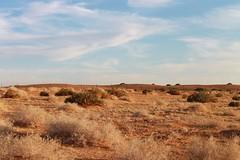 Beautiful Day (Ghadah Al-Mutlaq) Tags: sky plants colors beauty sand december desert saudi riyadh 2011
