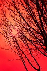 black branches red sky (Jen's Photography) Tags: red verticle tree southaustin jensphotography nikon d80 nikond80 outside outdoors austintexas austin texas south west southwest nature sky sun black winter season seasonal empty bare limbs stems february 2012 branches abstract illustration 2d color tint tinted explore interestingness centraltexas atx bighugelabs austinphotography austintexasphotography fairytale