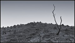 Desolate (ShinyPhotoScotland) Tags: trees people blackandwhite cold art nature composite manipulated lens landscape photography scotland flora emotion unitedkingdom argyll space politics places anger equipment numbers isolation toned contrasts minimalist existentialist indignation digikam shapeandform cosina20mm rawconversion enfuse glennant rawtherapee darktable ecologyenvironmentinteraction mankindnature