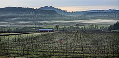 King Estate Winery (drburtoni) Tags: morning oregon spring 2012 kingestatewinery croworegon