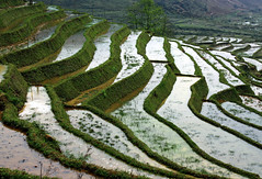 more rice terraces ... (Z Eduardo...) Tags: blue tree green water reflections landscape asia colours rice terrace vietnam fields sapa platinumheartaward flickraward flickraward5 mygearandme mygearandmepremium mygearandmebronze mygearandmesilver mygearandmegold mygearandmeplatinum mygearandmediamond