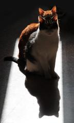 Due in uno - Two in one (Claudia Celli Simi) Tags: shadow cats chats ombra sombra gatos ombre felini schatten katzen gatti controluce