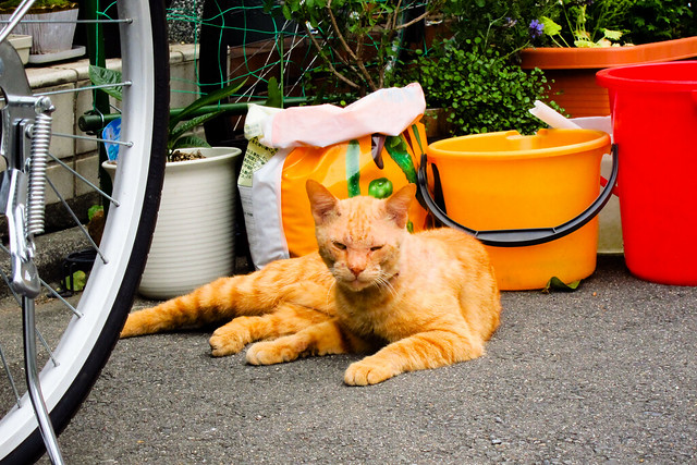 Today's Cat@2012-04-30