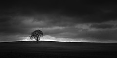That Tree and birds (.Rohan) Tags: ireland tree field birds landscape farm carlow thattree thebirdsarereal